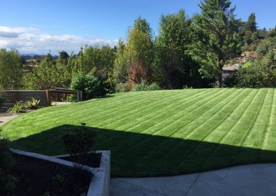 New-back-lawn-min